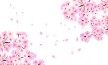 背景素材 桜フレーム 04