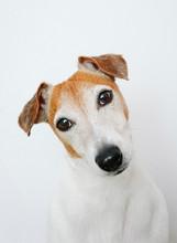 Wonderful Playful Dog Posing At Camera