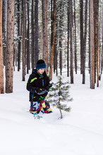 Boy In Snow Clothes Decorating Baby Pine Trees With Lights