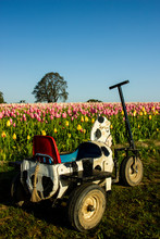 Kids Bicycle With Tulip Fields...