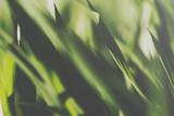 closeup of a sunlit grass lawn - 236568045