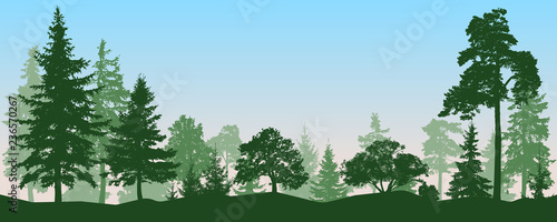 Piscine Forest, park, alley. Landscape of isolated trees. Vector illustration