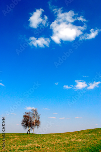 Early spring panoramic landscape of meadow with lonely birch in Warmia region of northern Poland - 236574686
