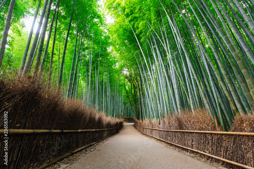 Spoed Fotobehang Bestsellers The Bamboo Forest of Arashiyama, Kyoto