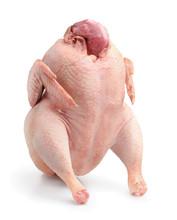 Fresh Raw Whole Turkey