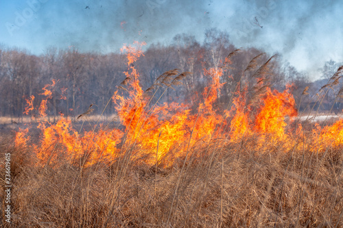 A strong fire spreads in gusts of wind through dry grass Fotobehang