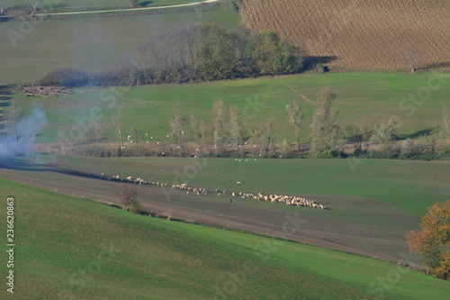 In de dag Khaki rural landscape with green fields,sheep,landscape, field, green, nature, agriculture, rural,countryside, farm,hill,land, tree, travel,italy