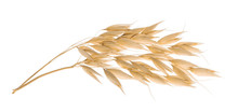 Oat Plant Isolated On White With Clipping Path