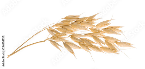 Oat plant isolated on white with clipping path Canvas Print