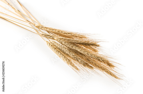 Fototapeta Ears of rye isolated on a white obraz