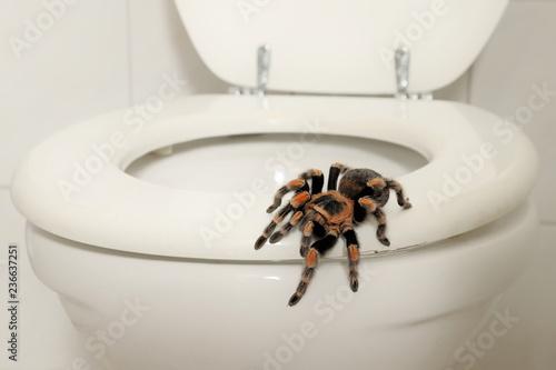 Fotografie, Obraz  Eine Vogelspinne sitzt auf der Toilette in einem Badezimmer, Szene bei Tag