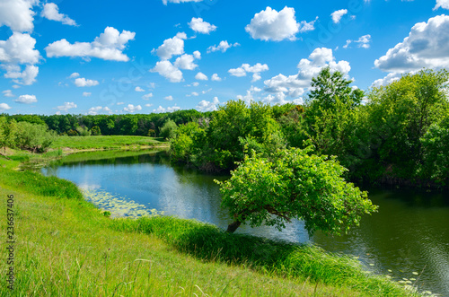 Sunny summer landscape with green trees growing on the riverbank.