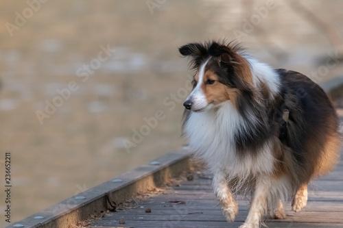 Fotografía  chien
