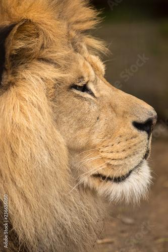 Photo  Simba I