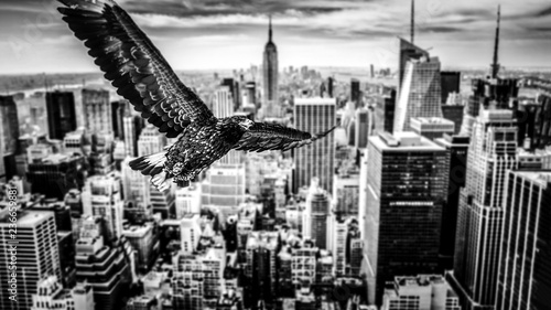 Black and white eagle flies over a city