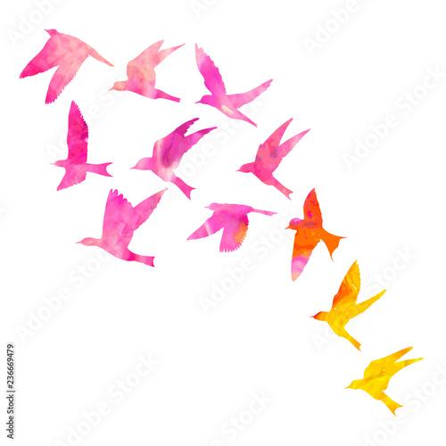 Fotografia Watercolour silhouette of flying birds on white background