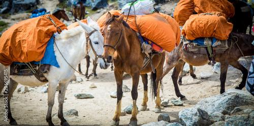 Fotobehang Zuid-Amerika land Horse in the mountains in Peru