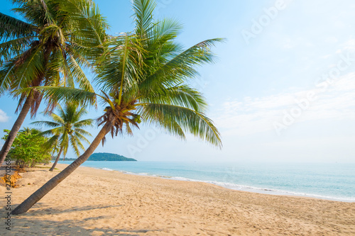 Foto auf Leinwand Palms Beautiful landscape of coconut palm tree on tropical beach (seascape) in summer. Summer background concept.
