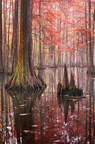 Beautiful bald cypress trees in autumn rusty-colored foliage, their reflections in lake water Canvas Print