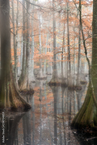 Photo Beautiful bald cypress trees in autumn rusty-colored foliage, their reflections in lake water