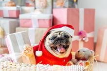 Pug In Santa Costume Sitting U...