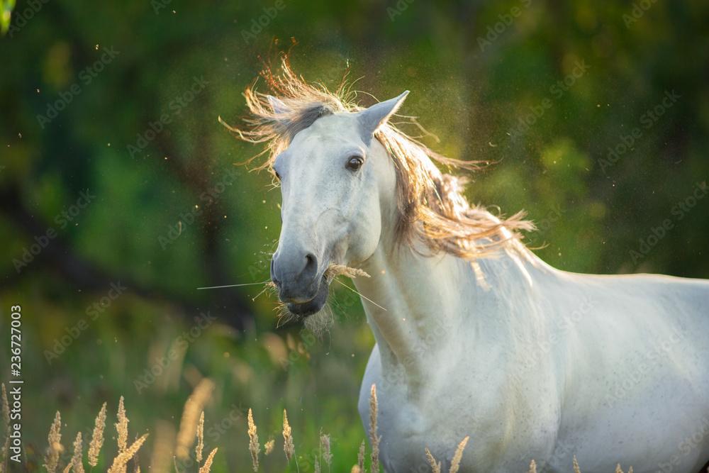 White horse funny portrait in sunlight