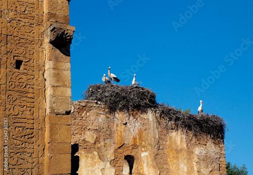 Fotografia Rabat, Morocco, Shellah Necropolis