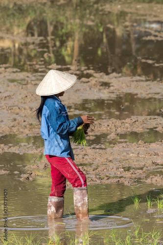 Deurstickers Asia land Laos - Reis Aussaat bei Champasak