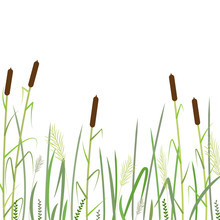 Reed And Green Grass Background   ,vector
