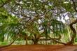 Kandy Stadt auf Sri Lanka