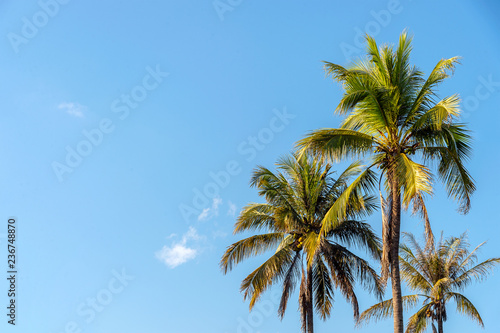 coconut trees and beautiful sky with soft-focus and over light in the background