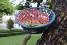 Food On The Basket For Squirrels And Birds In The Park.