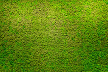 Green Moss Beautiful Texture W...