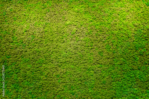 Fotografia, Obraz Green moss beautiful texture with good outdoor light