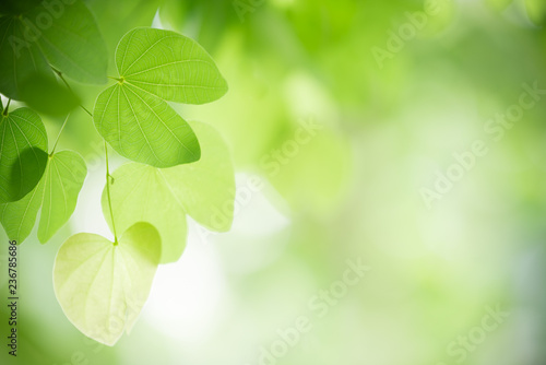 Poster de jardin Arbre Closeup nature view of green leaf on blurred greenery background in garden with copy space using as background natural green plants landscape, ecology, fresh wallpaper concept.