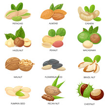 Nuts And Seeds. Raw Peanut, Macadamia Nut And Pistachio Snacks. Plant Seeds, Healthy Cashew And Sunflower Seed Isolated Vector Set