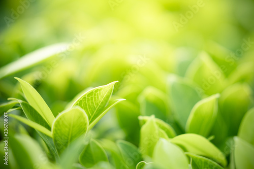 Fototapeta Closeup nature view of green leaf on blurred greenery background in garden with copy space using as background natural green plants landscape, ecology, clean fresh wallpaper concept. obraz na płótnie