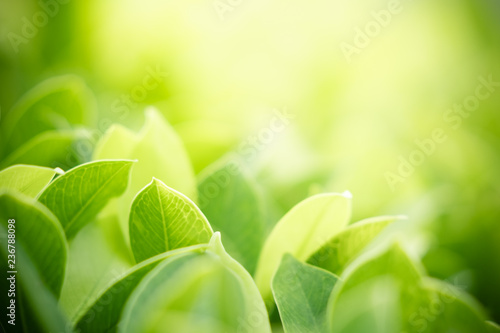 Foto auf AluDibond Gelb Schwefelsäure Closeup nature view of green leaf on blurred greenery background in garden with copy space using as background natural green plants landscape, ecology, clean fresh wallpaper concept.