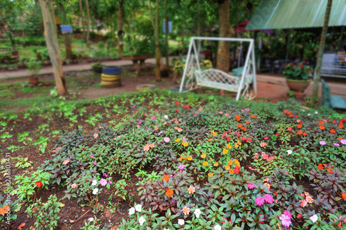 Photo  Vibrant beautiful botanic garden with various flowers and leaves in spring time