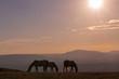 Wild Horses at Sunset in the High Desert