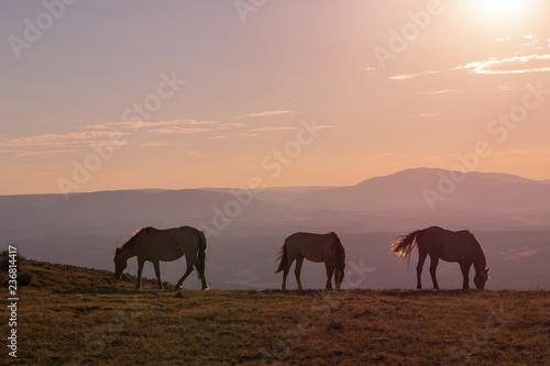Spoed Foto op Canvas Marokko Wild Horses at Sunset in the High Desert