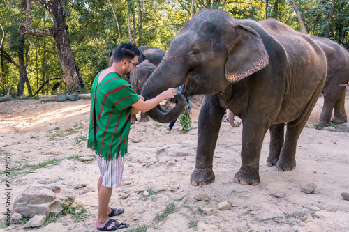 Fotografie, Obraz tourist at Elephant at sanctuary in Chiang Mai Thailand November 2018