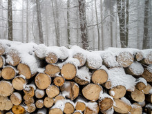 Pile Of Wood Covered By White Snow