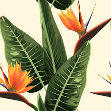 Strelitzia Bird Of Paradise Exotic Tropical Bright Orange Flowers And Green Leaves. Realistic Detailed Watercolor Style Floral Foliage Illustration On Light Beige Background. Stylish Luxury Plant.