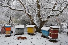 Dog Dachshund Named Bim Among The Hives