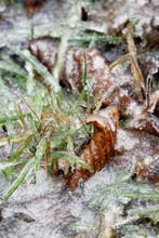 Rain After Heavy Frost Has Covered Nature With A Thick Layer Of Ice, Leaves And Blades Of Grass Under An Ice Sheet - Location Germany, Eastern Ore Mountains