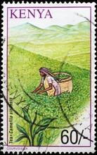 Tea Picker On Kenyan Postage Stamp