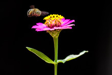Bee Hovering Over A Flower