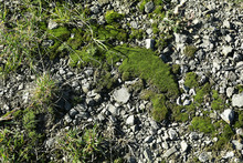 Moss, Grass And Stones As Background, Above View