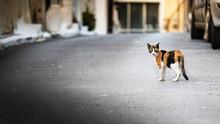 A Wild - Abandoned Cat Walking...